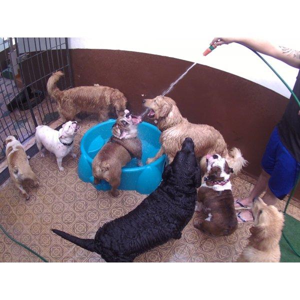 Serviço de Daycare Canino Quanto Custa em Média na República - Day Care para Cães