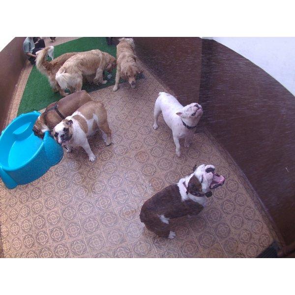 Serviço de Daycare Canino Quanto Custa no Parque Bristol - Day Care para Cães