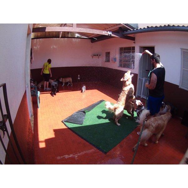 Serviço de Daycare Canino Valor no Jardim Marek - Daycare para Cães
