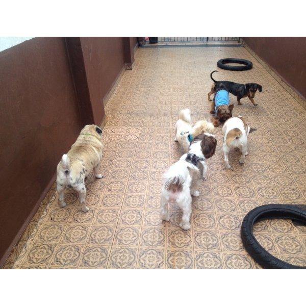 Serviço de Dog Sitter Contratar no Parque Bristol - Babá de Cachorro