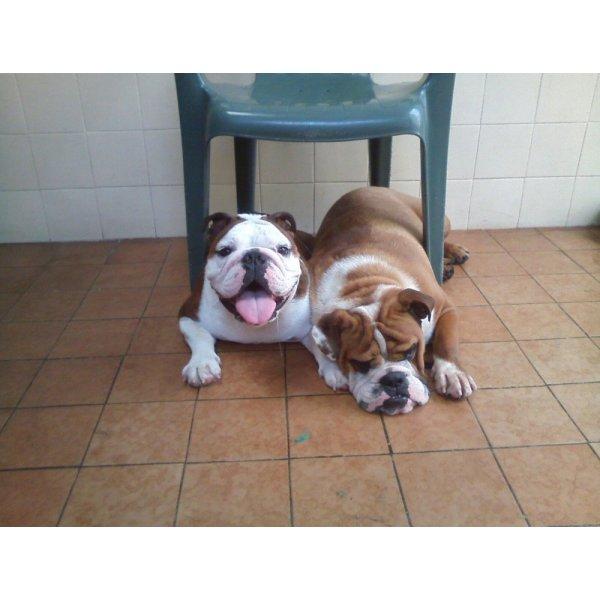 Serviço de Dog Sitter no Centro - Empresa de Dog Sitter