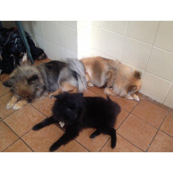 Serviço de Dog Sitter Preço na Cidade Universitária - Serviço Dog Sitter
