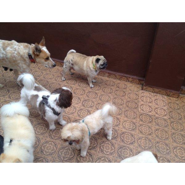 Serviço de Dog Sitter Quanto Custa em São Bernardo Novo - Serviço Dog Sitter