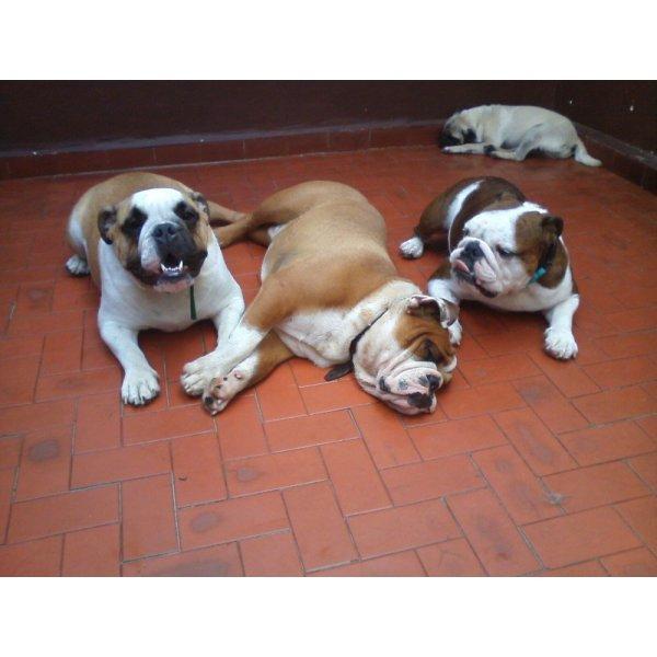 Serviço de Dog Sitter Valor  na Vila Assunção - Serviço Dog Sitter