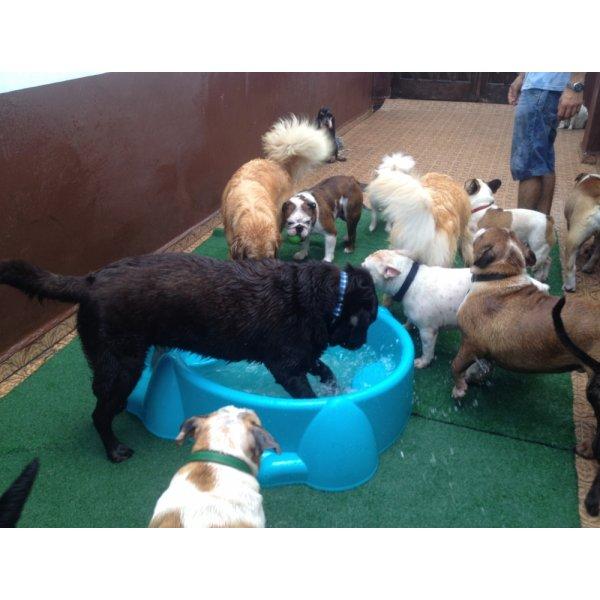 Serviço Dog Sitter Contratar na Vila Internacional - Dog Sitter no Bairro Jardim