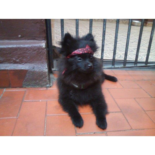 Serviço Dog Sitter na Independência - Babá de Cachorro