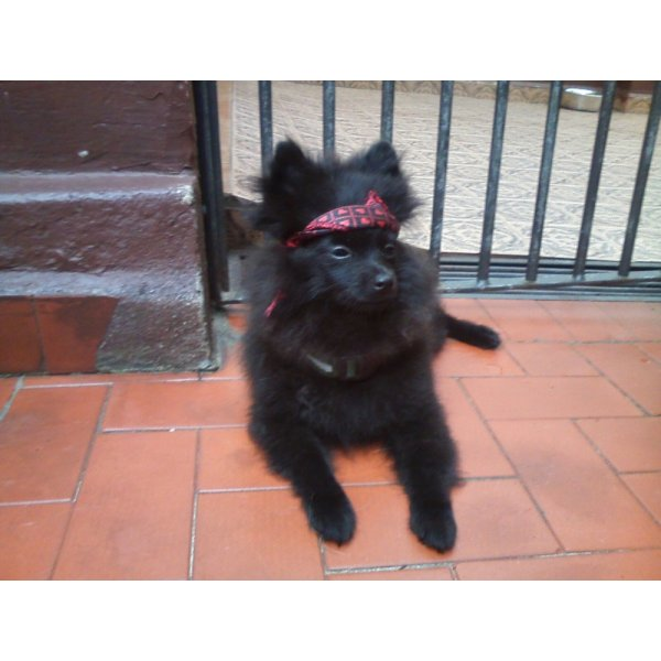 Serviço Dog Sitter no Jardim Vitória Régia - Empresa de Dog Sitter