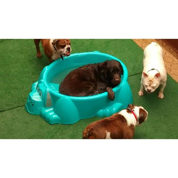 Serviço Dog Sitter Onde Contratar no Jardim Viana - Dog Sitter no Bairro Jardim