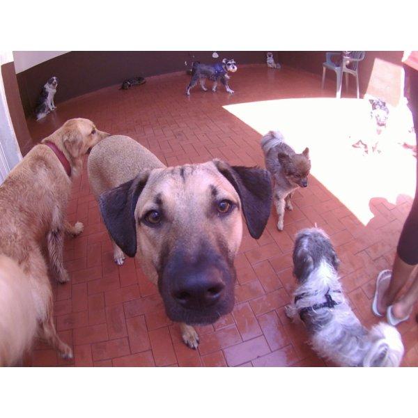 Serviço Dog Sitter Preços no Jardim do Estádio - Serviço de Babá de Cachorros Filhotes