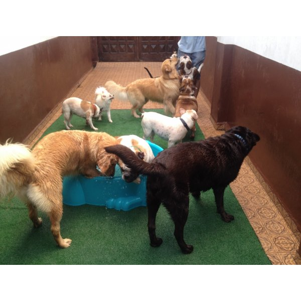 Serviço Dog Sitter Quano Custa na Vila Libanesa - Dog Sitter no Bairro Jardim