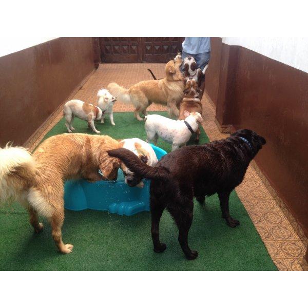 Serviço Dog Sitter Quano Custa no Jardim Stella - Serviço de Babá de Cachorros Filhotes