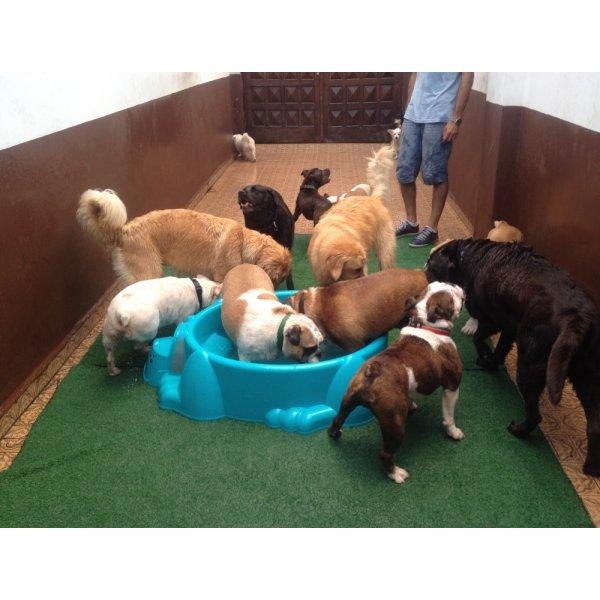 Serviço Dog Sitter Valor na Vila Aquilino - Dog Sitter no Bairro Jardim