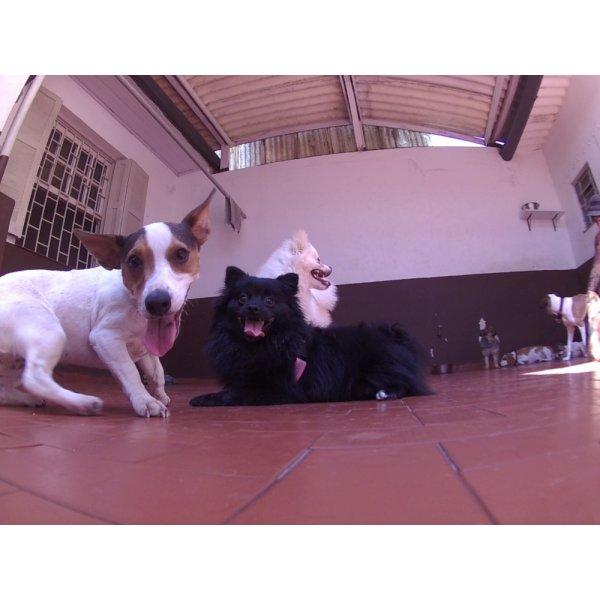 Serviços de Day Care Canino na Vila Alpina - Serviço de Daycare Canino