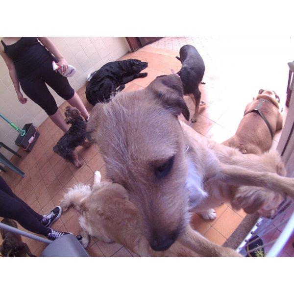 Serviços de Day Care Canino Preço no Taboão - Serviço de Daycare Canino