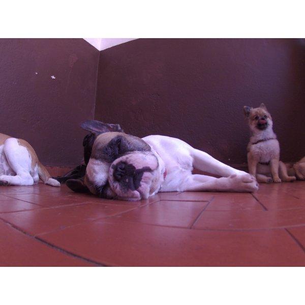 Serviços de Day Care Canino Preços na Cidade Monções - Serviço de Daycare Canino