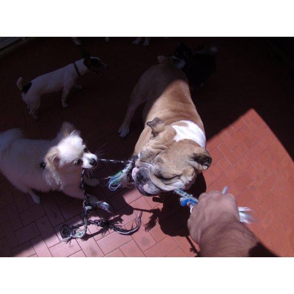 Serviços de Day Care Canino Quanto Custa em Média na Vila Susana - Serviço de Daycare Canino