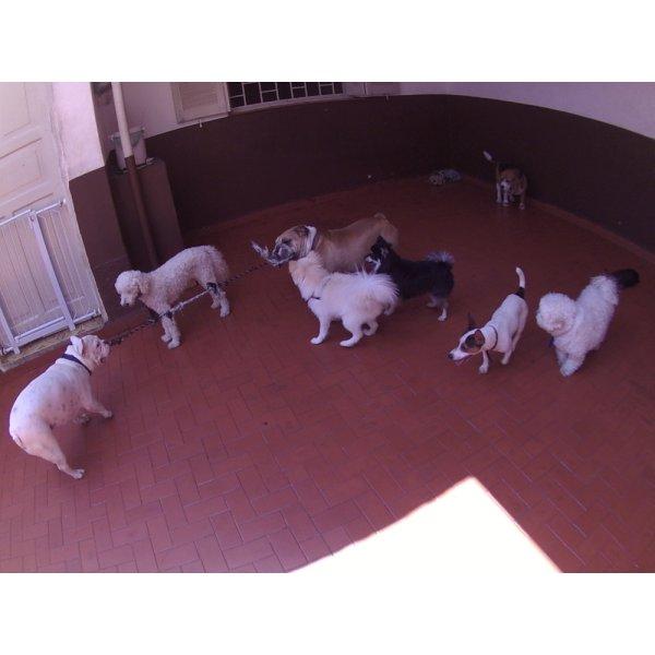 Serviços de Day Care Canino Quanto Custa na Vila Alice - Serviço de Daycare Canino
