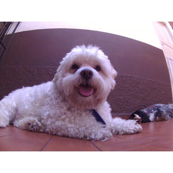 Serviços de Day Care Canino Valor no Jardim da Saúde - Serviço de Daycare Canino