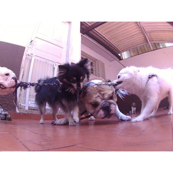 Serviços de Day Care Canino Valores no Parque Andreense - Serviço de Daycare Canino