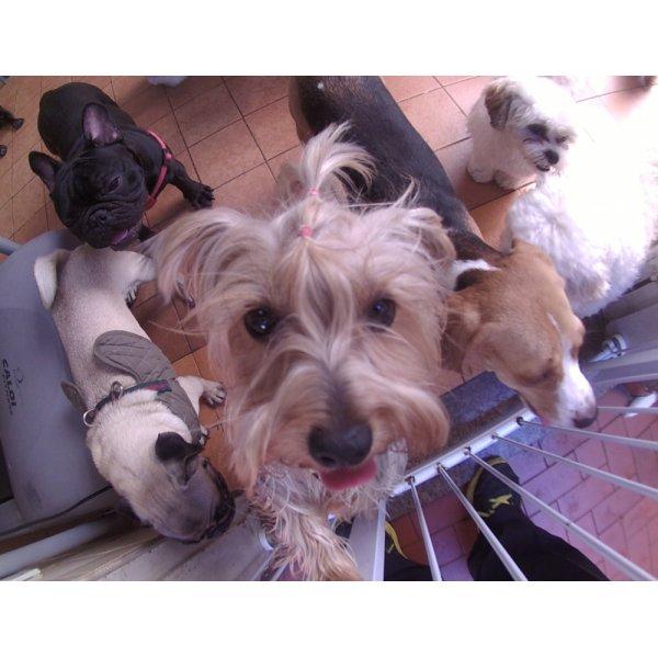 Serviços de Daycare Canino Preços na Vila Luzita - Serviço de Daycare para Cachorros