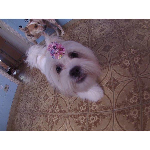 Serviços de Daycare Canino Quanto Custa  no Jardim Lusitânia - Daycare para Cães