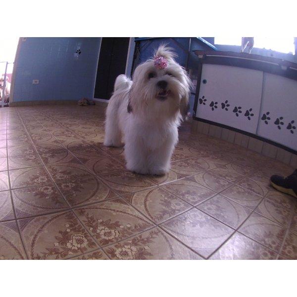 Serviços de Daycare Canino Valor no Jardim Brasil - Daycare para Cães