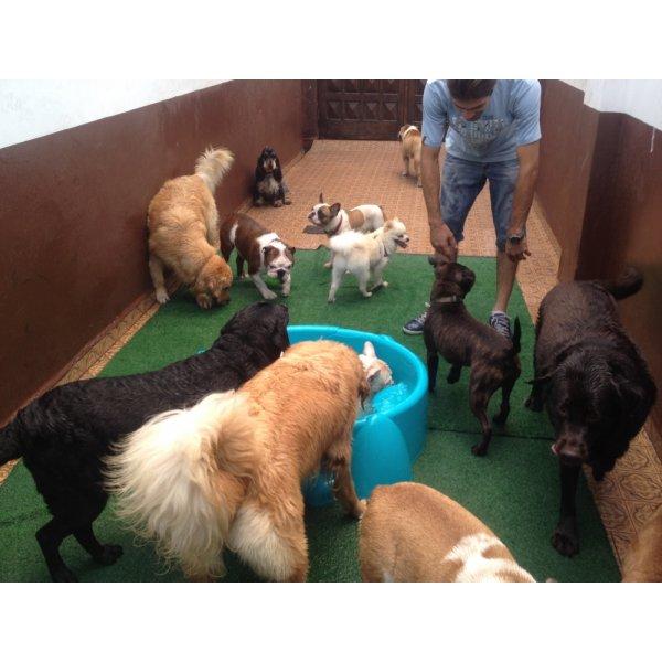 Serviços Dog Sitter Preços no Parque Gerassi - Serviço de Babá de Cachorros Filhotes