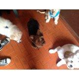 Adestrador Canino no Cursino