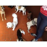 Adestrador Canino preço no Jardim Botucatu