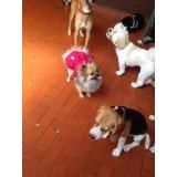 Adestrador Canino preços na Vila Anhangüera