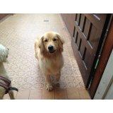 Adestrador Canino preços na Vila Sara