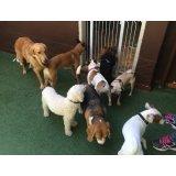 Adestrador Canino valor no Parque Gerassi