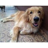 Adestrador Canino valores na Fundação