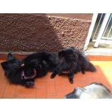 Adestrador Canino valores na Vila Congonhas