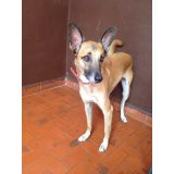 Adestrador de Cachorro no Jardim Mendes Gaia
