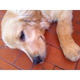 Adestrador de Cachorros na Vila Bélgica