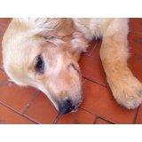 Adestrador de Cachorros no Jardim Itacolomi