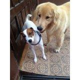 Adestrador de Cachorros quanto custa em Ferrazópolis