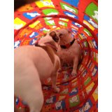 Adestrador de Cães com valor bom na Vila Glória