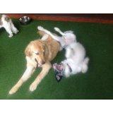 Adestrador de Cães com valor bom na Vila Nogueira