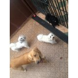 Adestrador de Cães contratar no Inamar