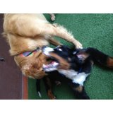 Adestrador de Cães em Santa Paula