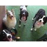 Adestrador de Cães em Santo André