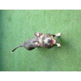 Adestrador de Cães em São Bernardo
