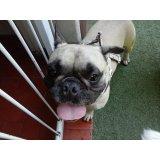 Adestrador de Cães valor no Jardim Pinheiros