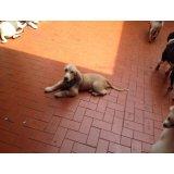 Adestrador Profissional de Cães preço na Vila Guarani