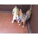 Adestrador Profissional de Cães quant custa em média na Vila Liviero