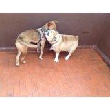 Adestrador Profissional de Cães quanto custa no Jardim da Saúde