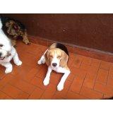 Adestrador Profissional de Cães valor na Vila Castelo