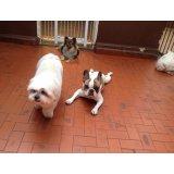 Adestrador Profissional de Cães valores na Chácara do Castelo